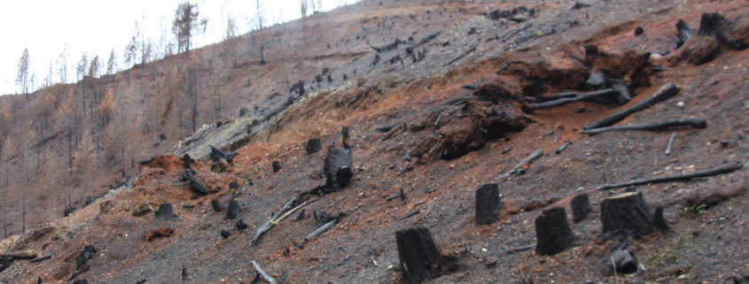 Pleasant Creek fire plantation aftermath