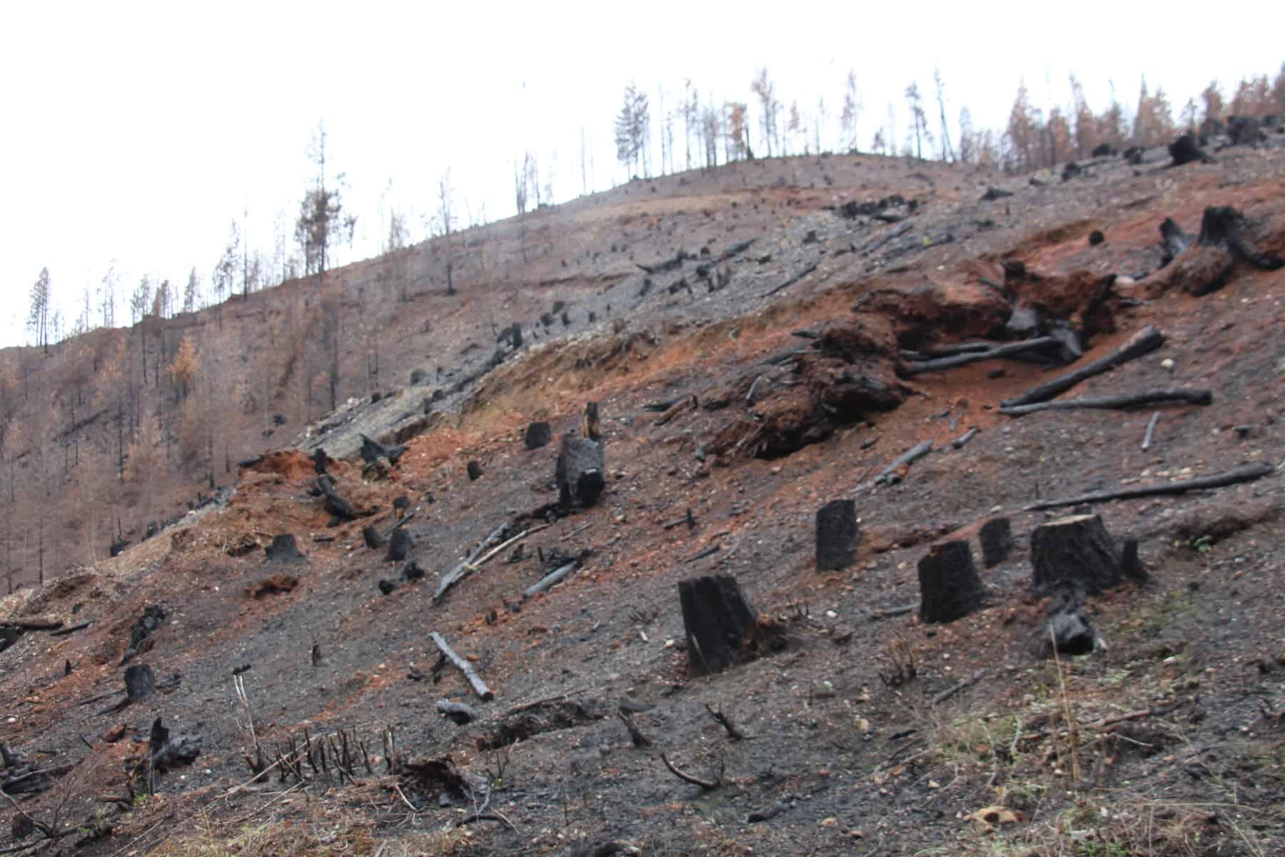 Pleasant Creek fire plantation aftermath